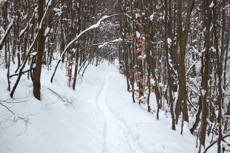 Schneebedeckter Weg des Winters Wald stockfotos