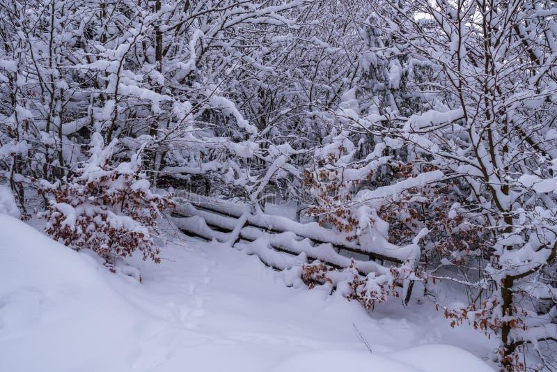 Schneebedecktes hölzernes Tor im Wald stockbilder