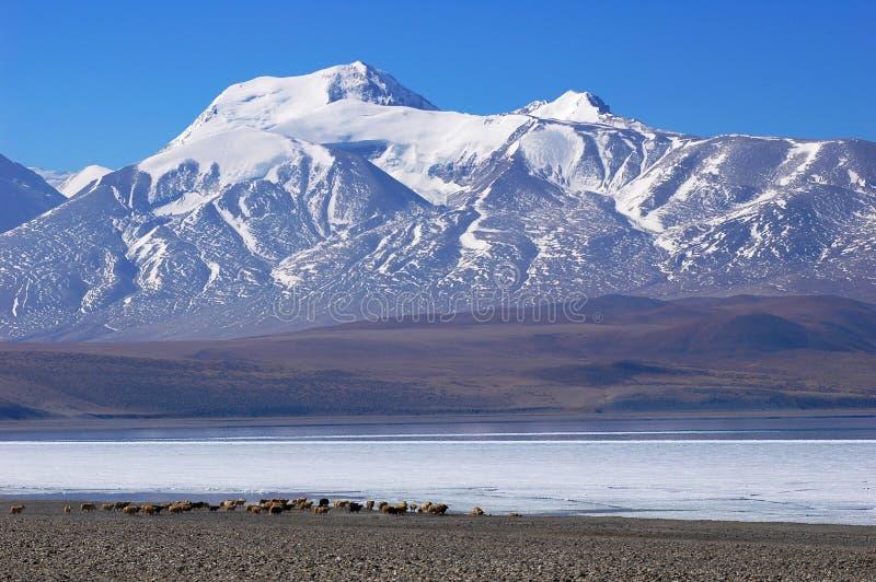 Schneeberge und einfrierender See in Tibet stockfotografie