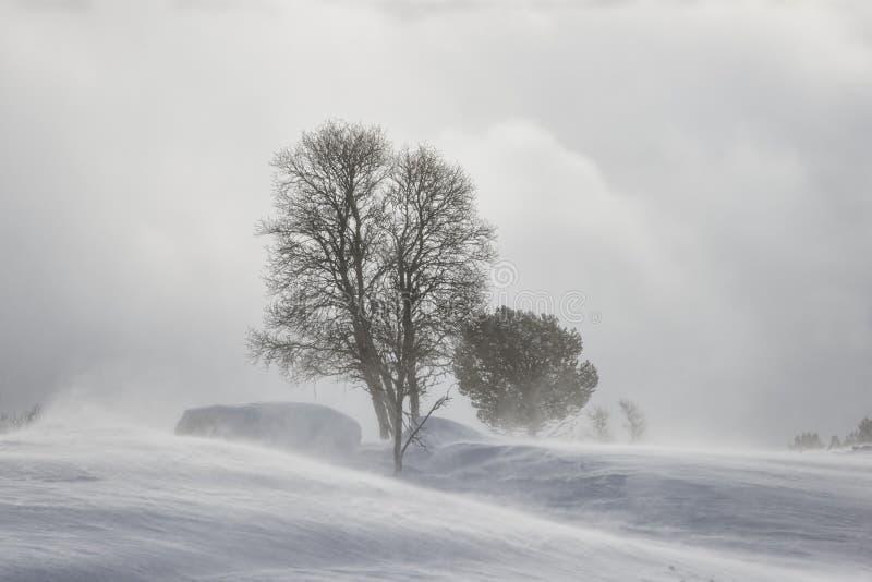 Schneeblizzard lizenzfreie stockbilder