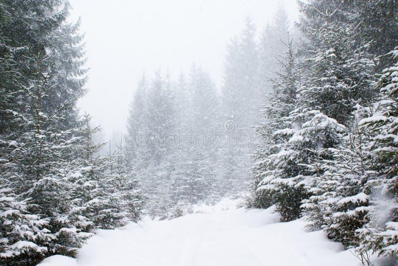 Schneefälle im dichten schneebedeckten Tannenwald auf der Straße stockfotografie