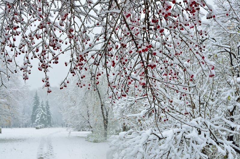 Schneefälle im Stadtpark-Winterhintergrund lizenzfreie stockfotos