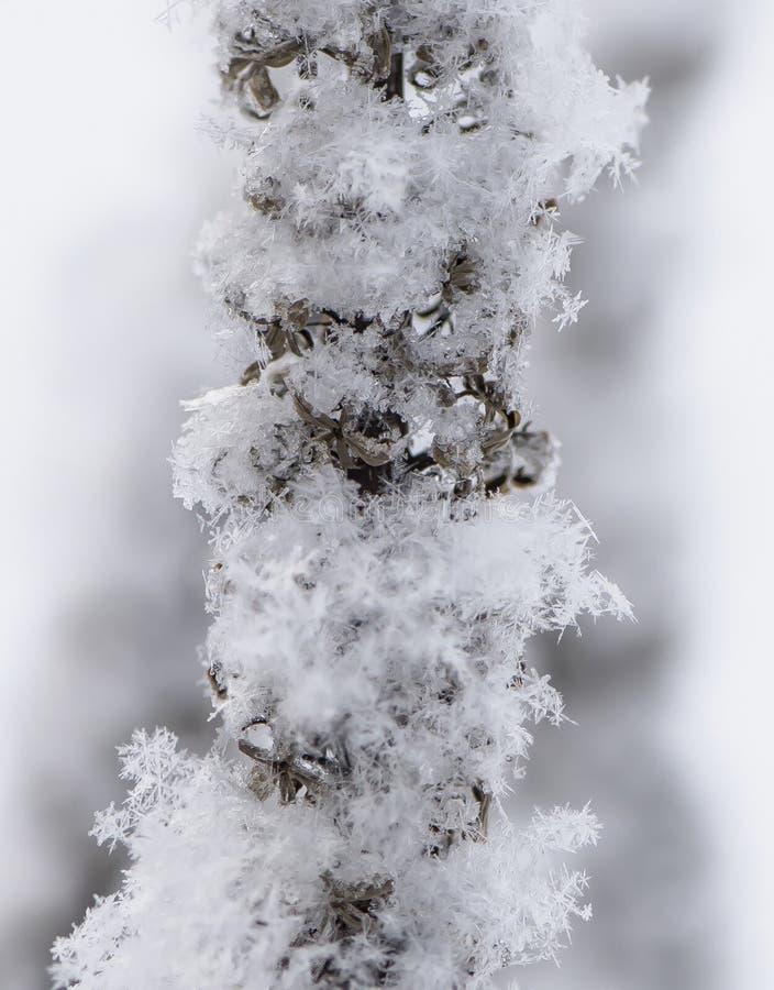 Schneeflocken auf Anlage stockfoto