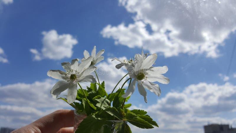 Schneegl?ckchenfr?hlingsblumen Schneegl?ckchen gegen den blauen Himmel Schneegl?ckchennahaufnahme Ein kleiner Blumenstrauß von Sc stockfotos