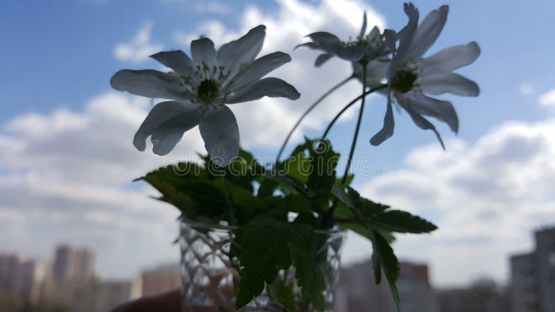 Schneegl?ckchenfr?hlingsblumen Schneegl?ckchen gegen den blauen Himmel Schneegl?ckchennahaufnahme Ein kleiner Blumenstrau? von Sc stockfoto