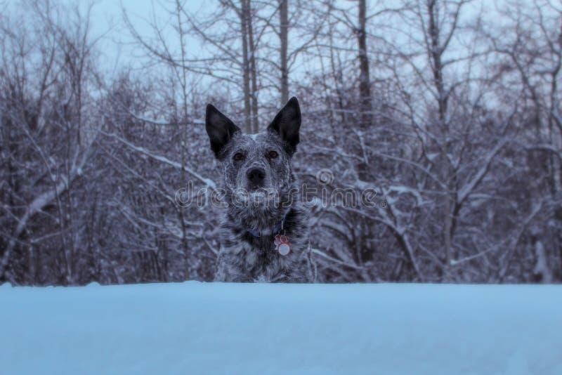 Schneehügel stockbild