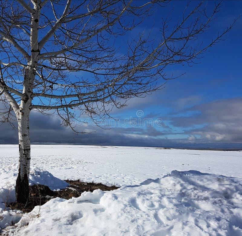 Schneehintergrund und ein blauer Himmel stockfotografie