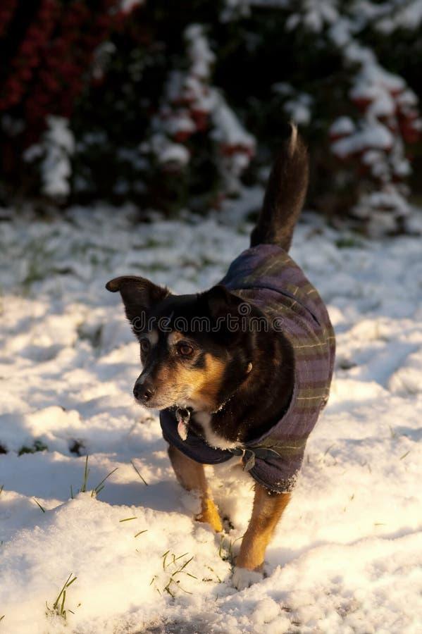 Schneehund lizenzfreies stockfoto