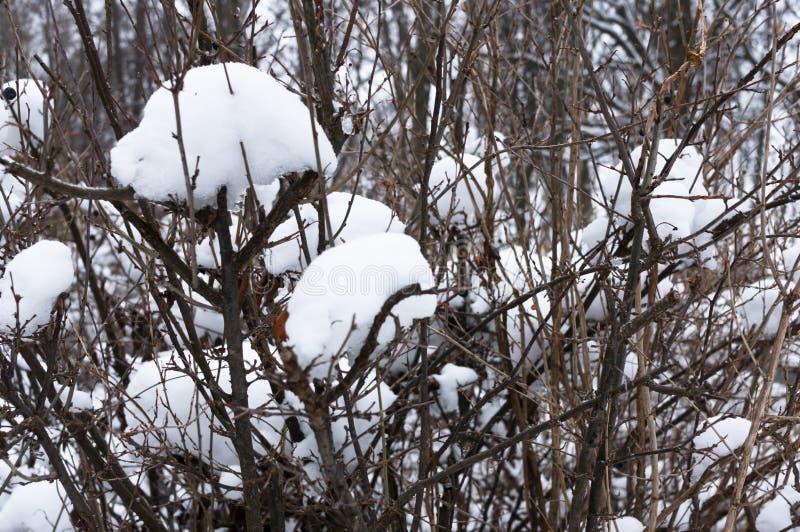 Schneekappen auf Baumasten stockbild