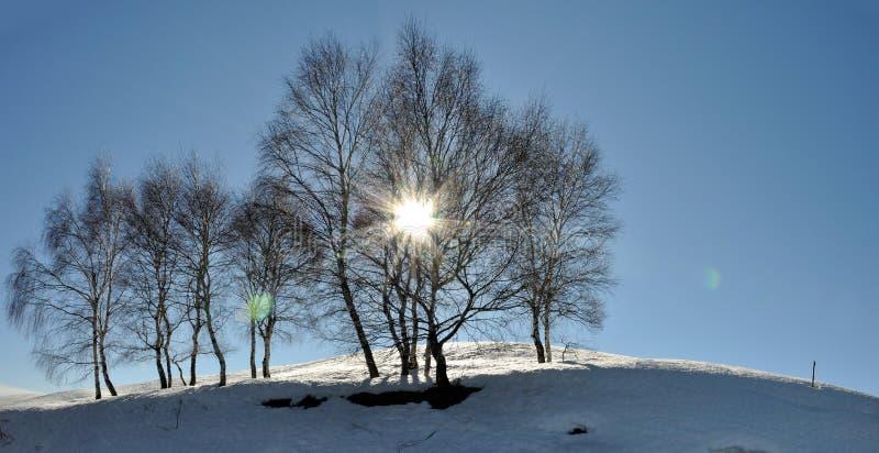 Schneelandschaft mit Sonnenlicht stockfotografie