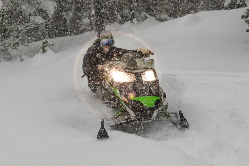 Schneemobil an der hohen Geschwindigkeit, während es im Kiefernwald schneit stockbilder