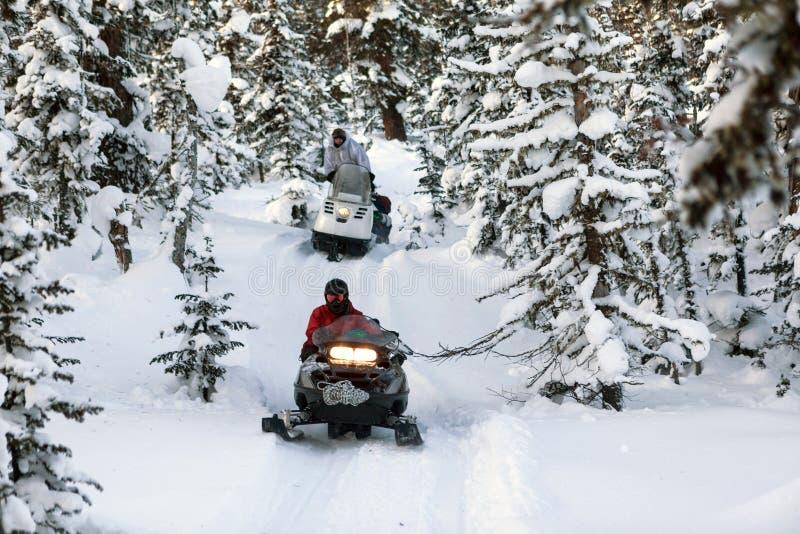 Schneemobil fahrung im Wald lizenzfreies stockbild