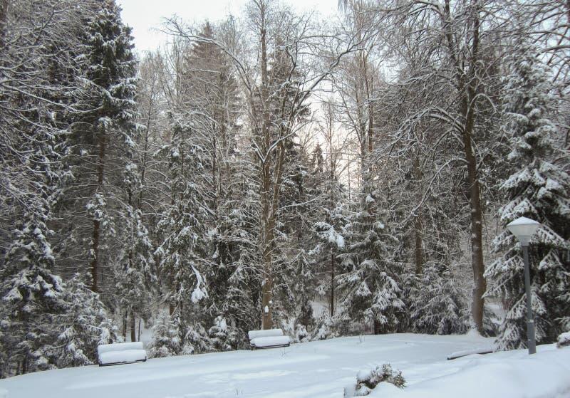 Schneepark mit schneebedeckten Bänke stockfoto