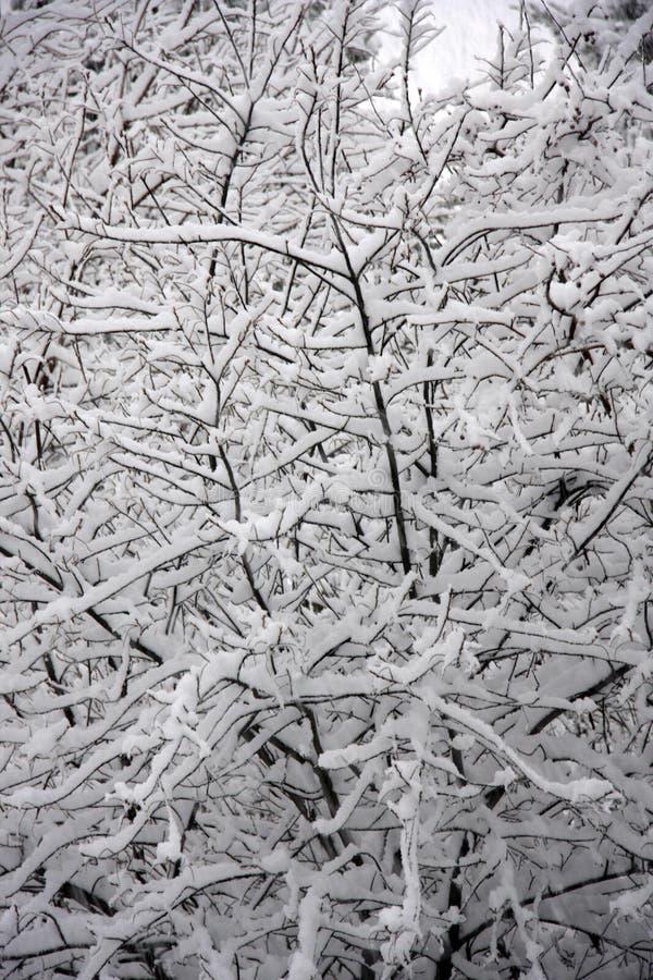 Schneesturm lizenzfreies stockfoto