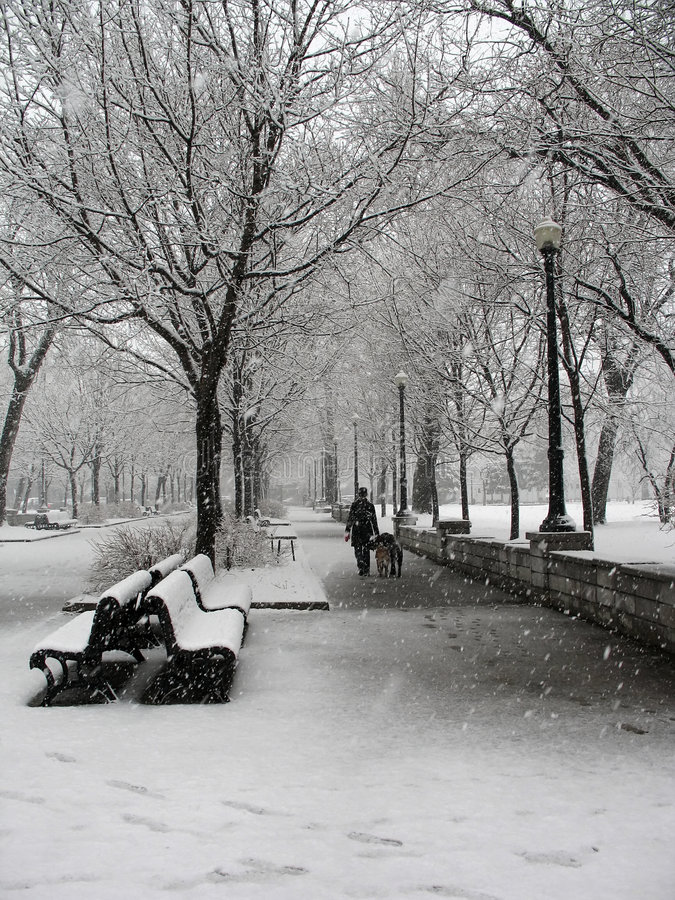 Schneesturm im Park in Montreal lizenzfreies stockbild