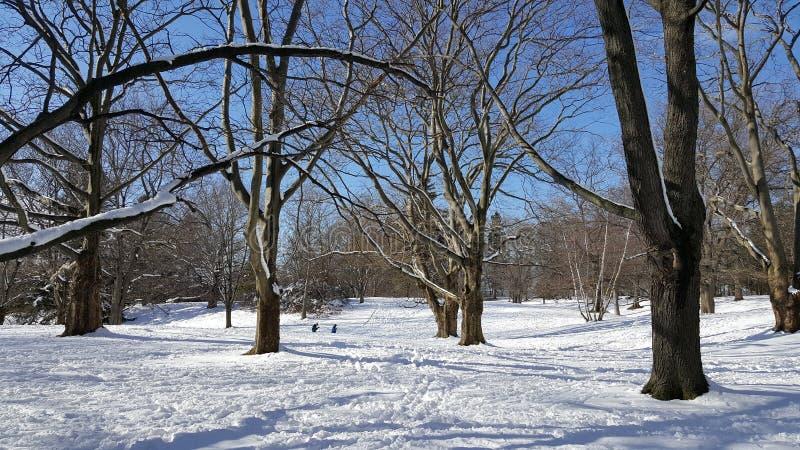Schneetag im Park stockbild