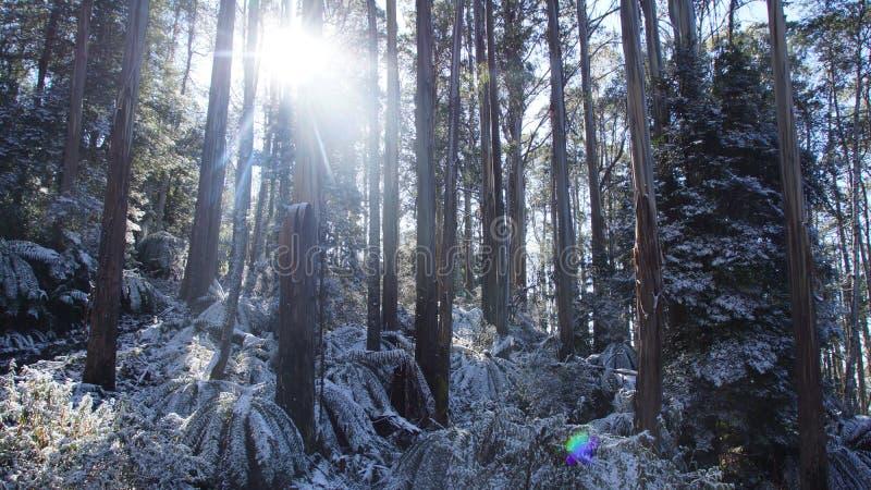 Schneewald lizenzfreies stockbild