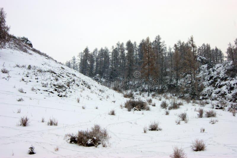 Schneewald und Berge - farbenfrohe Winterlandschaft lizenzfreie stockfotografie