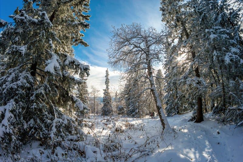 Schneeweiße Bäume im Nationalpark Zyuratkul lizenzfreie stockfotografie