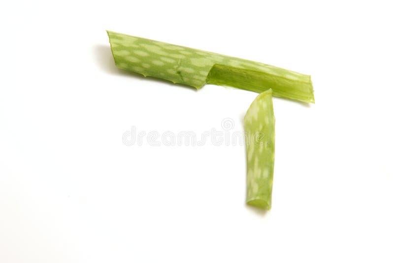 Schneiden Sie Aloe Vera lizenzfreies stockfoto