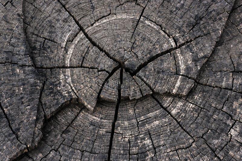 Schneiden Sie Baum lizenzfreie stockfotografie