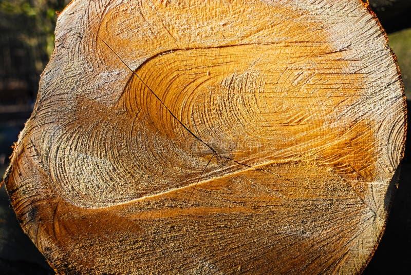 Schneiden Sie Baum mit sichtbaren Alters-Ringen und schneiden Sie Kennzeichen stockbild