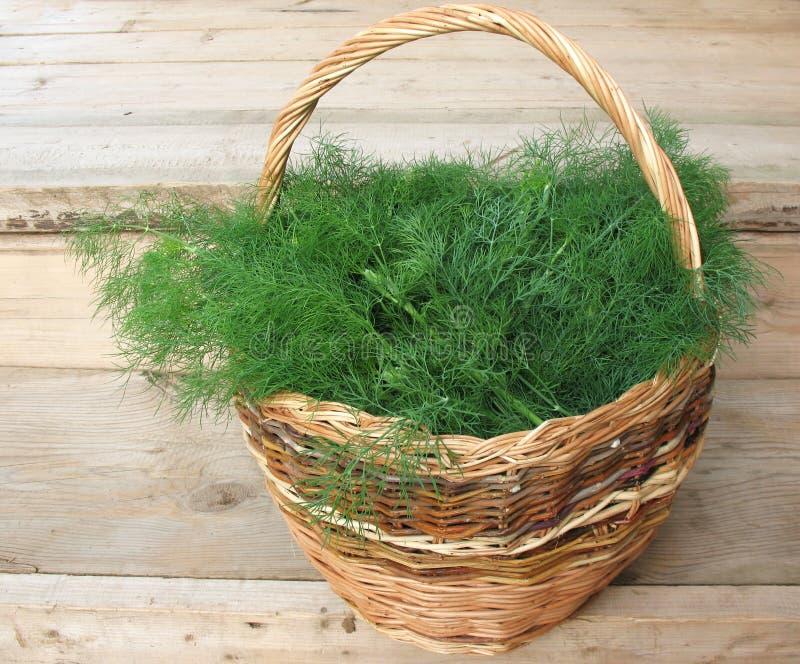 Schneiden Sie den gerochenen Fenchel (Anethum graveolens) lizenzfreie stockfotos