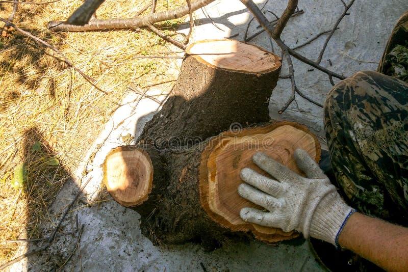schneiden Sie einen Baum mit einem Angestellten lizenzfreies stockbild