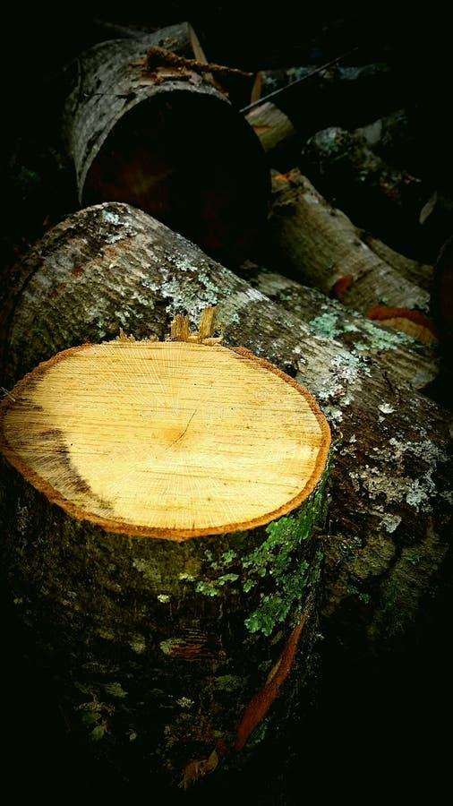 Schneiden Sie frisch Brennholz lizenzfreies stockbild