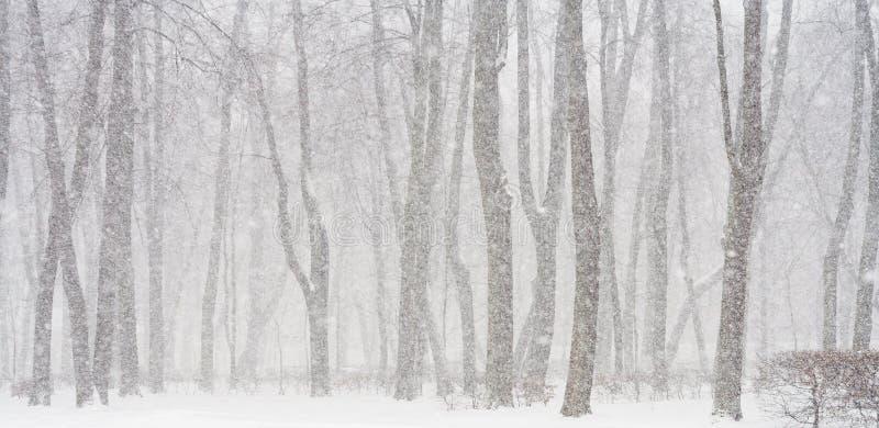 Schneien stockbilder