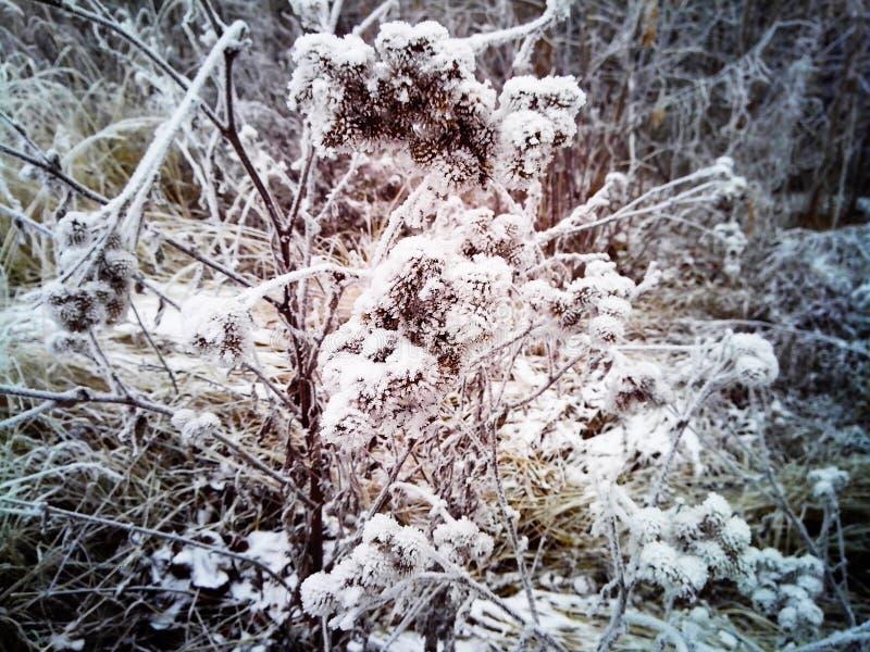 Schneien Sie über trockenem Gras, früher Winter, Russland lizenzfreie stockfotografie