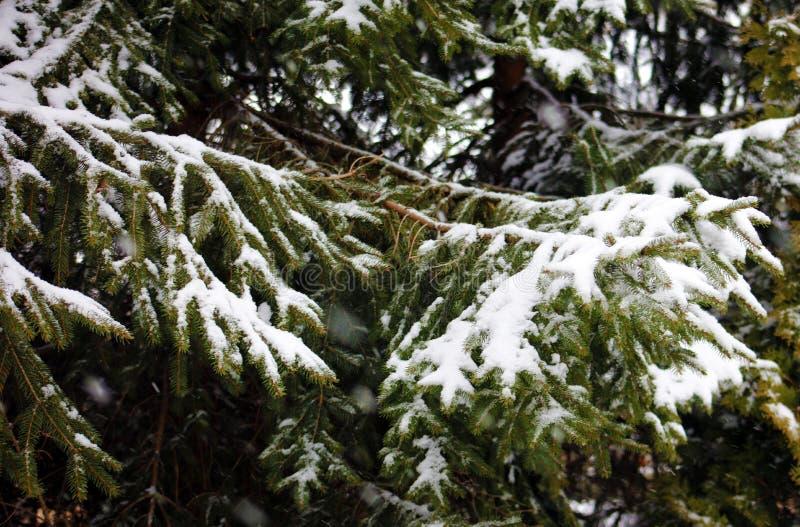 Schneiende Szene des Winters mit Bäumen im Hintergrund lizenzfreies stockbild