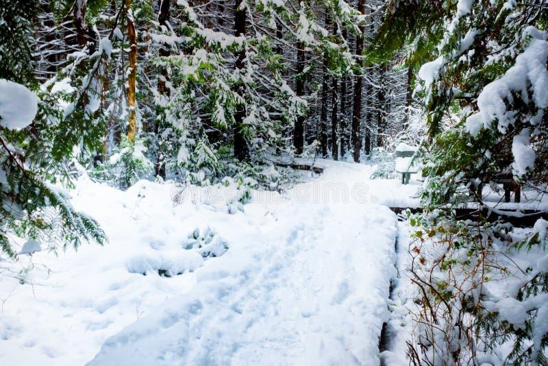 Schneise bedeckt im dichten Schnee, mit Abdrücken auf einem Fußweg und immergrünen Bäumen, welche die Landschaftslandschaft gesta lizenzfreies stockfoto