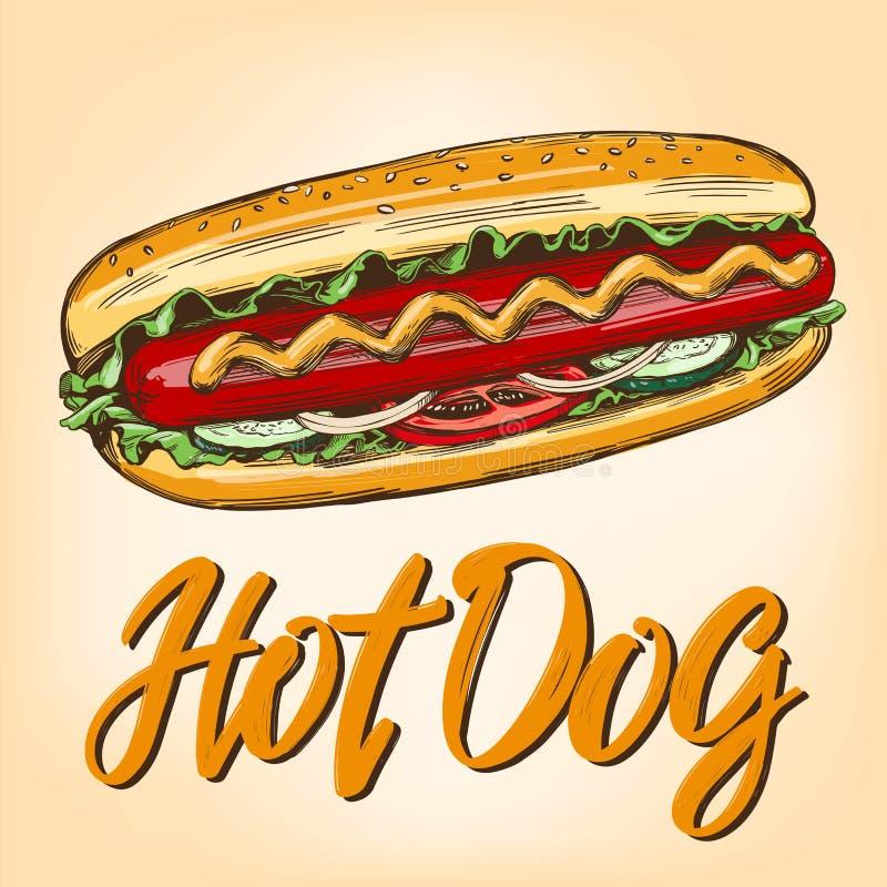Schnellimbiß des Hotdogs, Hand gezeichnete Vektorillustrations-Farbrealistische Skizze, Retrostil vektor abbildung