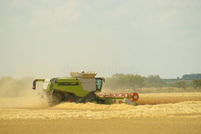 Schnitt des Mais mit Mähdrescher lizenzfreies stockfoto