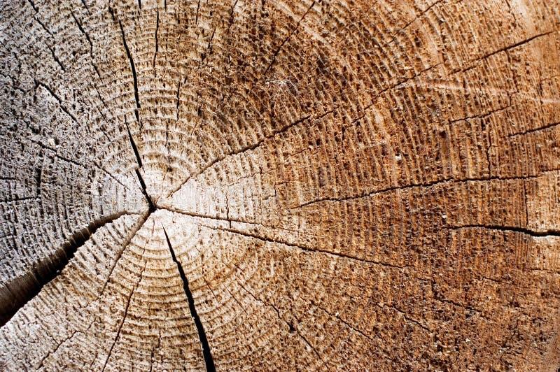 Schnitt eines alten Baums. Abschluss oben stockfoto