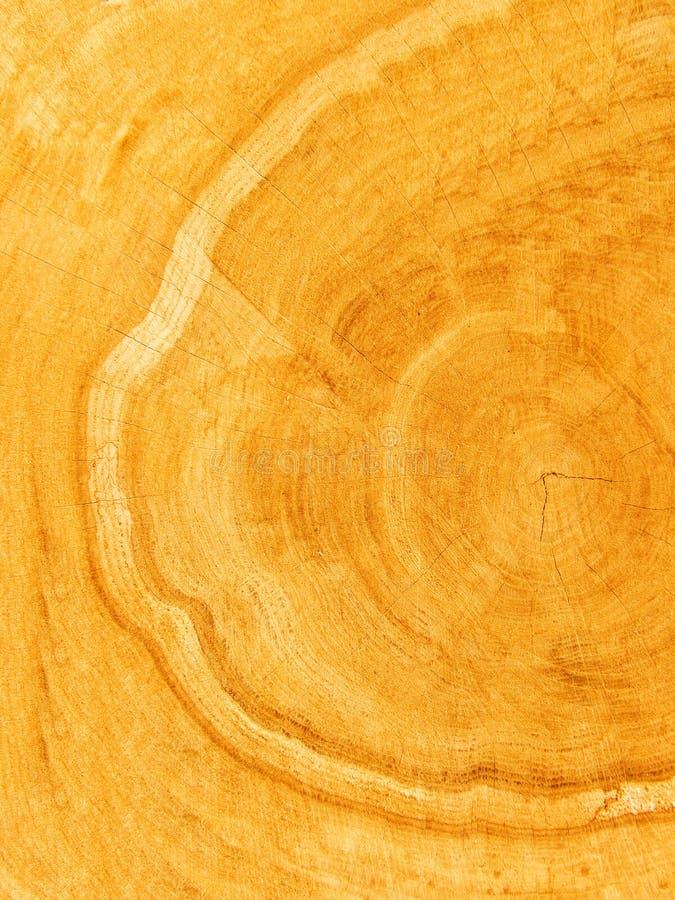 Schnitt eines Baums eine Eiche stockfotografie