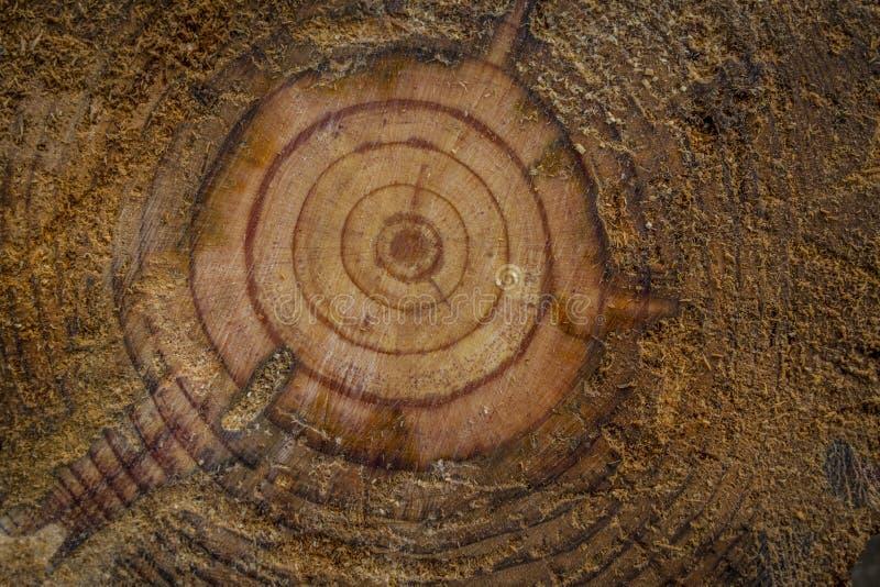 Schnitt eines Baums lizenzfreies stockfoto