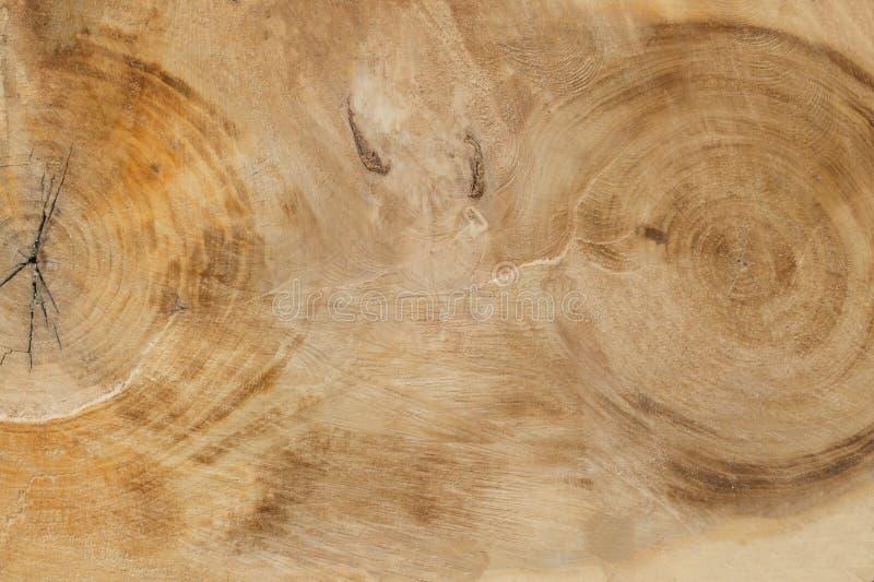 Schnitt eines großen alten Baums stockbilder