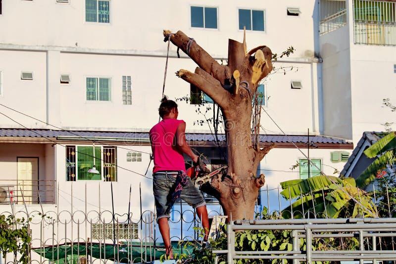 Schnitt eines großen Baums mit elektrischer hölzerner Sägemaschine in der Stadt durch einen Berufsbaumausschnitt stockbilder