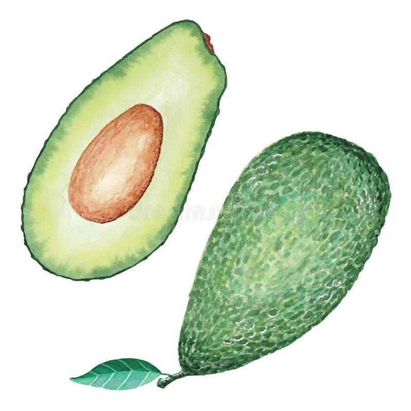 Schnittansicht der reifen geschmackvollen Avocado stockfotos