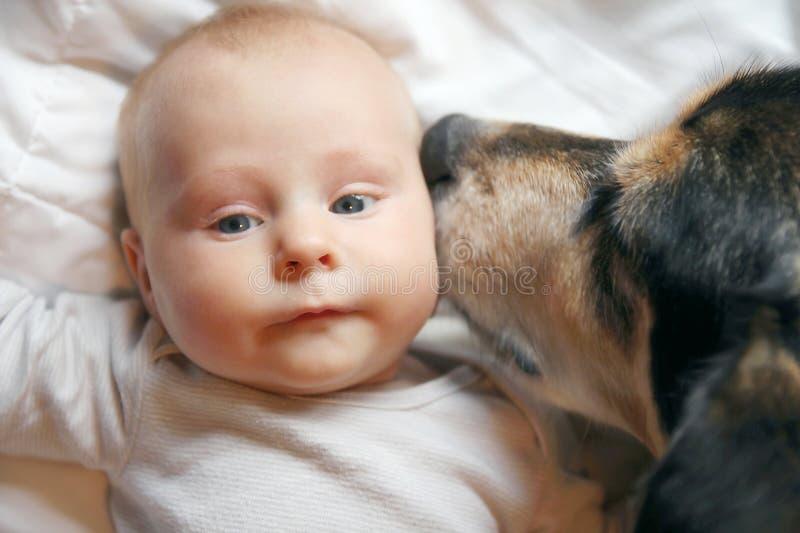 Schoßhund, der zweimonatiges altes Baby küsst lizenzfreies stockbild