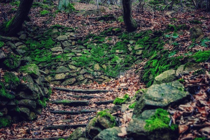 Schodki natura zdjęcie royalty free