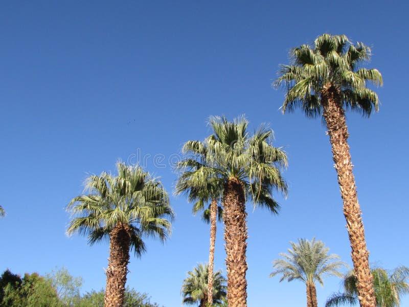 Schodowi kroków drzewka palmowe fotografia royalty free