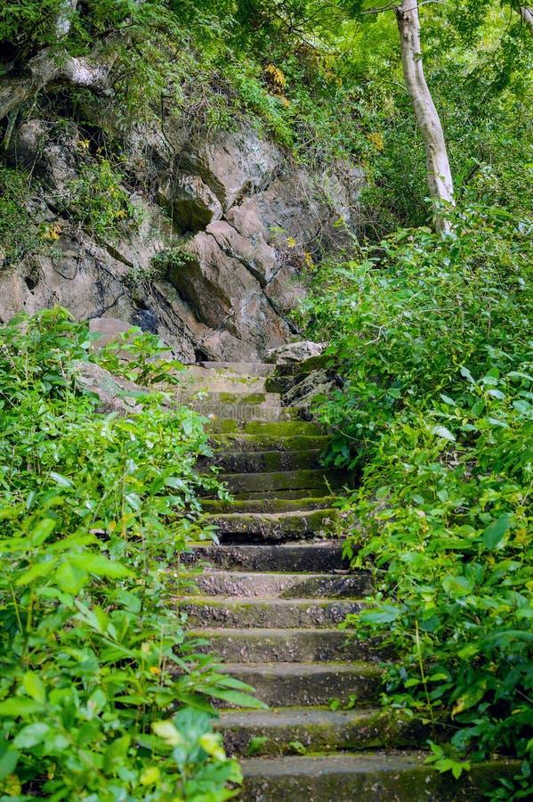 Schody iść do buddyjskiej świątyni w dżungla lesie fotografia royalty free