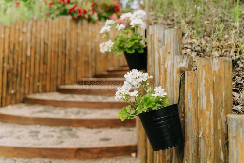 Schody i wieszaki kwiatowe na drewnianym płocie fotografia stock