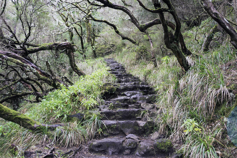 schody w Madeira dzikiej naturze obraz stock
