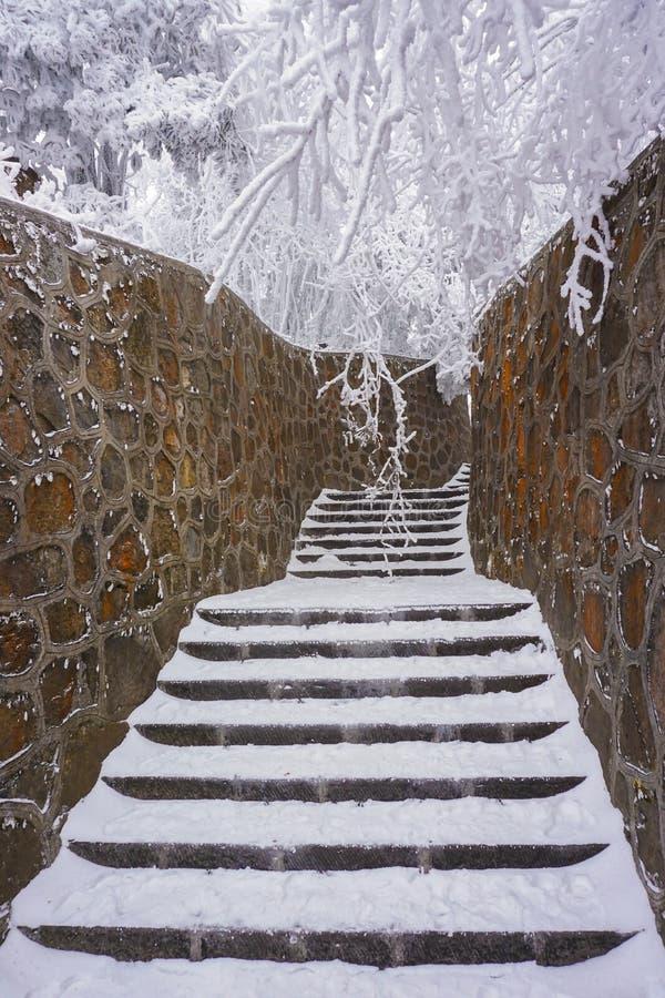 Schody zakrywający śniegiem i związywał skały ścianą wśród drzew zakrywających śniegiem, z zdjęcia stock
