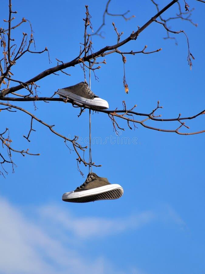 Schoenen op een boom stock foto's