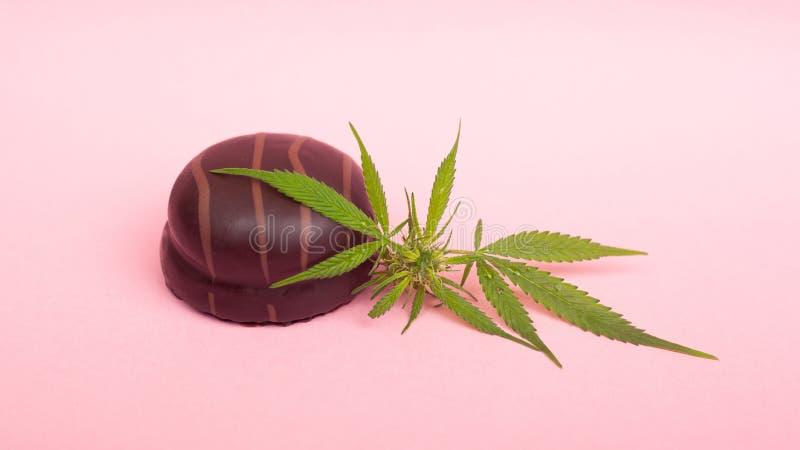 Schokoladenkekse mit THC- und CBD-Extrakt auf rosafarbenem Hintergrund Schönheitssüße stockfoto